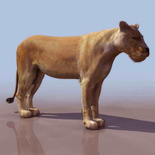 Lions Animals 18 3d Model Download Free 3d Models Download